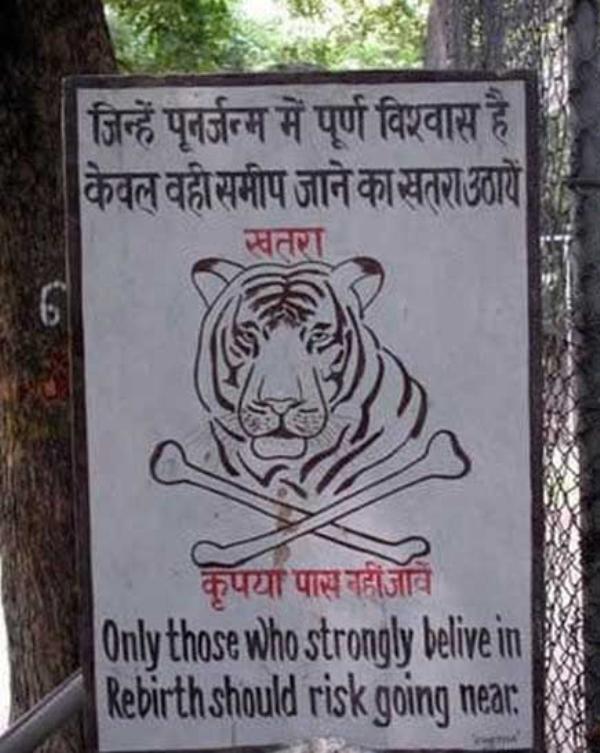 Funny_tiger