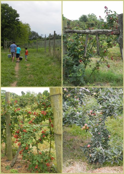 Crooked run orchard - collage01