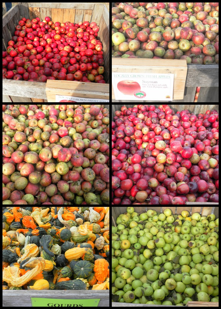 Apple Harvest festival - collage3